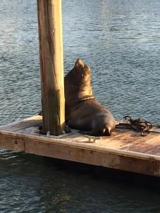 Seal on pier