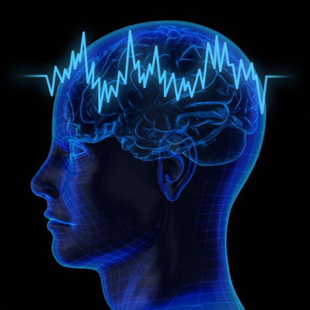 The human brain