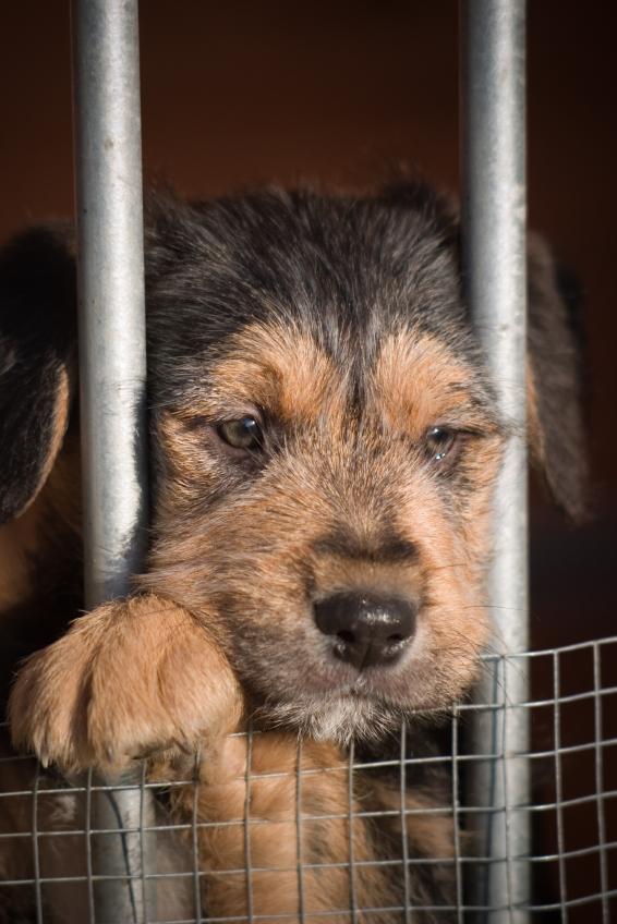 Adopt me please!!